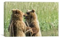 Brown Bear Cubs - Face Off, Canvas Print
