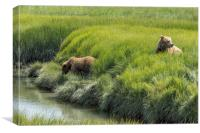 Two Brown Bear Cubs in a Meadow of Variegated Gree, Canvas Print