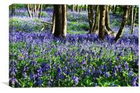 Bluebells in Upnor, Canvas Print