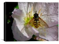 Hoverfly on Flower, Canvas Print