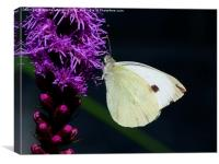 White Butterfly on a Liatris, Canvas Print
