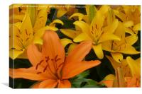 Lily Flowers, Canvas Print