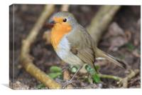 Robin - Standing on Branch, Canvas Print