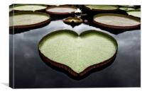 Heart Shaped Lily Pad, Canvas Print