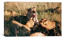 JST2932 Lioness with cubs feeding, Canvas Print