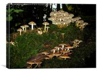 Fairy Ring of Mushrooms, Canvas Print