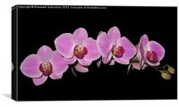Purple Phalaenopsis Orchid Arc, Canvas Print