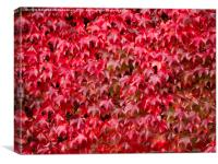 Boston Ivy in Autumn, Canvas Print