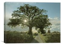 Brilliant sunburst in an Oak tree, Canvas Print