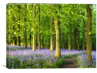 Path through Bluebell Wood., Canvas Print
