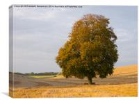 Lone Beech Tree., Canvas Print