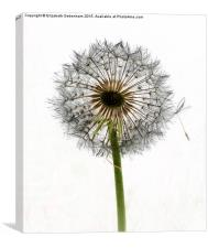 Dandelion art; letting go, Canvas Print
