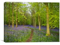 All is Quiet in Bluebell Heaven, Canvas Print