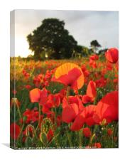 Poppy Field Portrait, Canvas Print