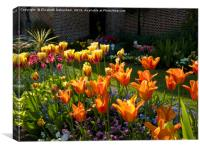 Suncatching Tulips at Chenies, Canvas Print