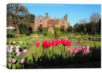 Spring Tulips at Chenies Manor Sunken Garden, Canvas Print