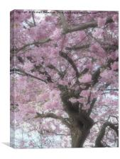 Cherry Blossom Haze, Canvas Print