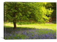 Oak Tree in the Bluebells, Canvas Print