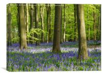 Bluebell Woodland in Bright Sunshine, Canvas Print