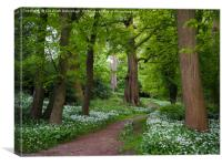 Woodland Path through a Carpet of Wild Garlic, Canvas Print