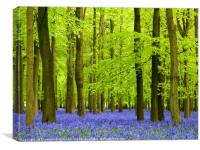 Heavenly Bluebells, Canvas Print