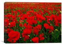 Bright Red Poppy Field, Canvas Print