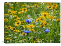 Yellow Corn Marigolds with Blue Cornflowers, Canvas Print