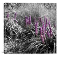 Square Black and White Ornamental Grasses, Canvas Print