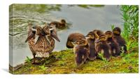 Ducklings, Canvas Print