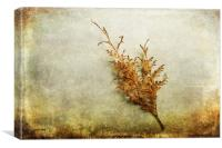 Faded Thuja, Canvas Print