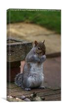 Adorable Grey Squirrel, Canvas Print