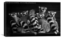 Gang Of Ring-Tailed Lemurs, Canvas Print