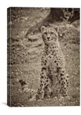 Sitting Cheetah, Canvas Print