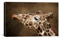 Giraffe Reaching For A Branch, Canvas Print
