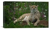 Cheetah Amidst Spring Flowers, Canvas Print