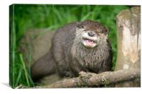 Smiling Otter, Canvas Print