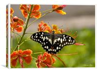 butterfly on a flower, Canvas Print