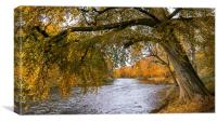 Autumn, River Don, Canvas Print