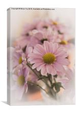 Chrysanthermums in vase, Canvas Print