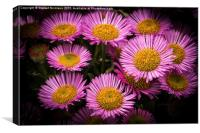 Pink Little daisys , Canvas Print