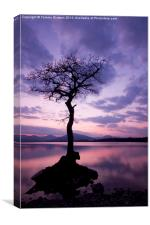 Millarochy Bay Tree., Canvas Print