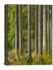 Trees at The Hermitage, Dunkeld., Canvas Print