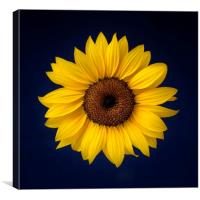 Sunflower on a Blue Background, Canvas Print