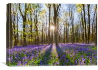 Bluebells and the sun, Canvas Print