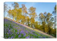 The Great Malvern Bluebells, Canvas Print