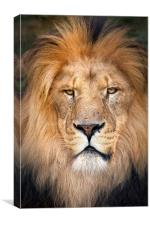 Lion Face, Canvas Print