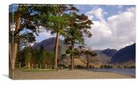 Buttermere Pines and High Crag, Canvas Print