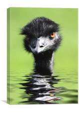 Keeping Head Above Water, Canvas Print