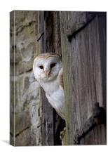 Barn Owl Bird of Prey, Canvas Print