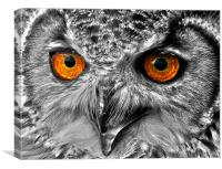 Eyes of a Bird of Prey, Canvas Print